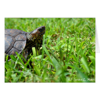 ornate wood turtle looking right card