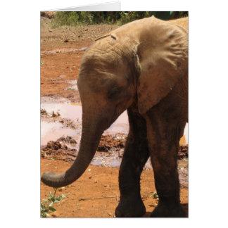 Orphan Baby Elephant Card