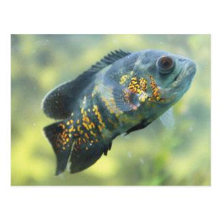 Oscar Fish Postcard