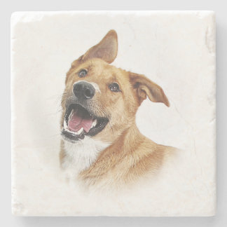 Oscar, the lab want to be, coaster stone beverage coaster