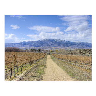 Osoyoos Vineyard View Postcard