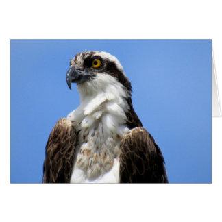 Osprey (4964) card