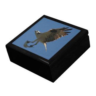 Osprey Bird Animal Wildlife Fish Gift Box