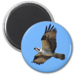 Osprey Bird Magnet Refrigerator Magnet