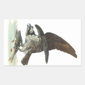 Osprey by Audubon