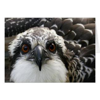 Osprey Card