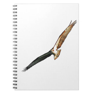 Osprey Flying Spiral Notebooks