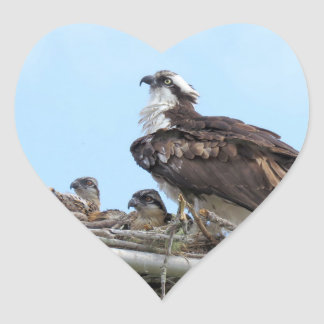 Osprey Hawk mother and babies Stickers