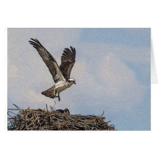 Osprey in a nest card