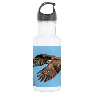 Osprey in flight at Honeymoon Island State Park 532 Ml Water Bottle