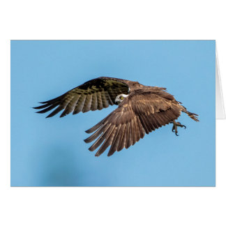 Osprey in flight at Honeymoon Island State Park Card