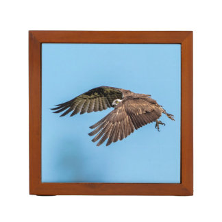 Osprey in flight at Honeymoon Island State Park Desk Organizer