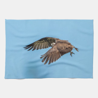 Osprey in flight at Honeymoon Island State Park Kitchen Towel