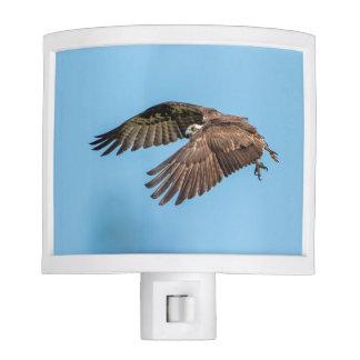 Osprey in flight at Honeymoon Island State Park Night Lights