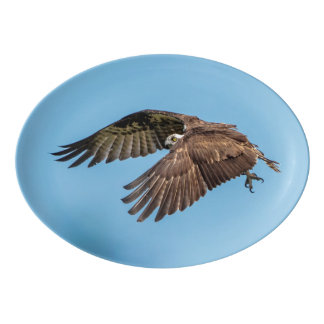 Osprey in flight at Honeymoon Island State Park Porcelain Serving Platter