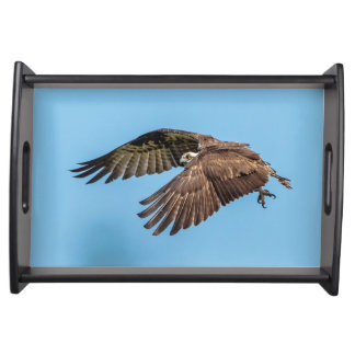 Osprey in flight at Honeymoon Island State Park Serving Tray