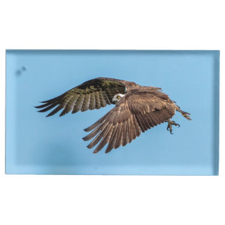 Osprey in flight at Honeymoon Island State Park Table Card Holder