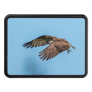 Osprey in flight at Honeymoon Island State Park Trailer Hitch Cover