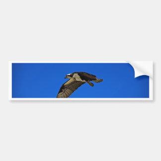 Osprey in Flight II Bumper Sticker