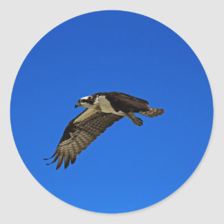 Osprey in Flight II Classic Round Sticker