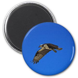 Osprey in Flight II Magnet