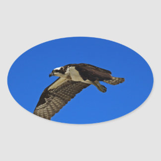 Osprey in Flight II Oval Sticker