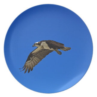 Osprey in Flight II Plate