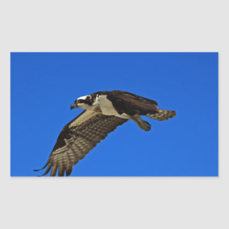 Osprey in Flight II Sticker