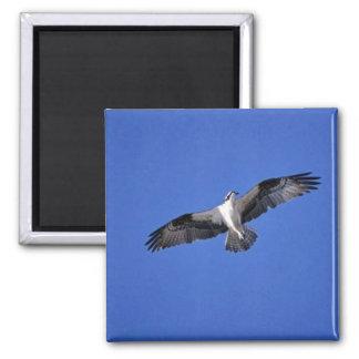 Osprey in Flight Magnet