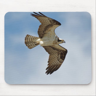 Osprey in Flight Mouse Pad