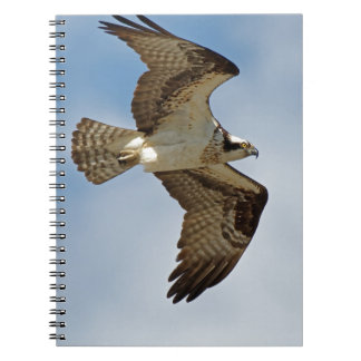 Osprey in Flight Spiral Notebooks