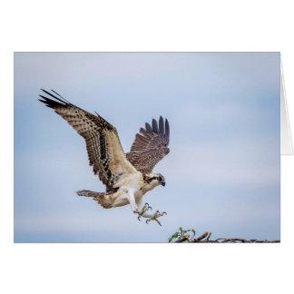 Osprey landing in the nest card