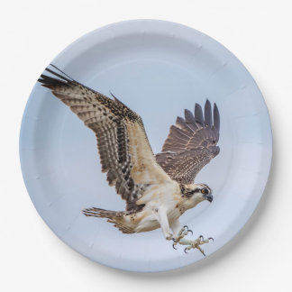 Osprey landing in the nest paper plate