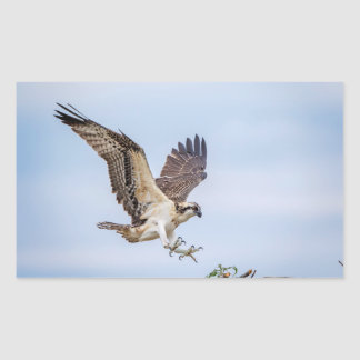 Osprey landing in the nest sticker