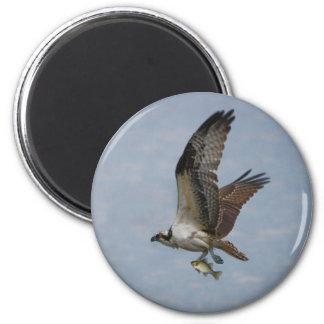 Osprey Magnet