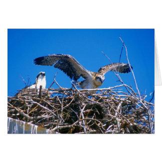Osprey Nest Card