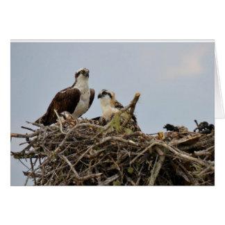 Osprey nest with baby card