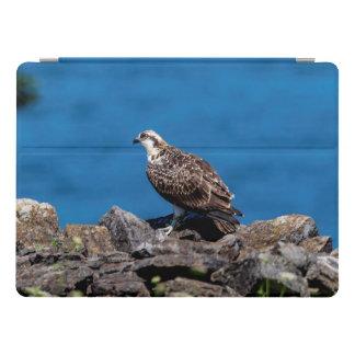 Osprey on the rocks iPad pro cover