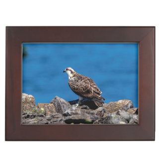 Osprey on the rocks keepsake box