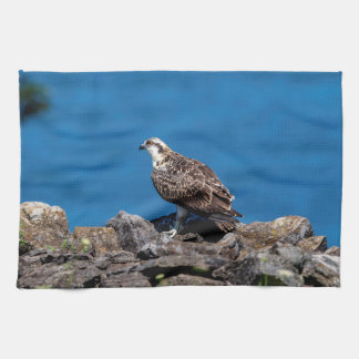 Osprey on the rocks kitchen towel