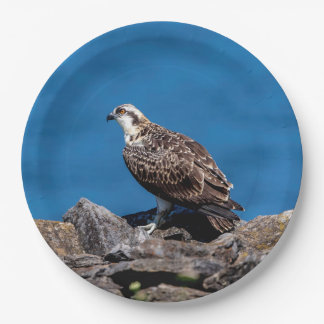 Osprey on the rocks paper plate