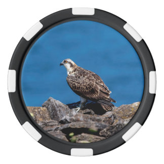 Osprey on the rocks poker chips