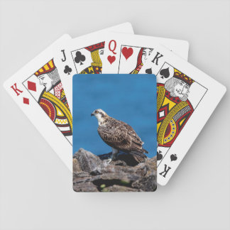 Osprey on the rocks poker deck