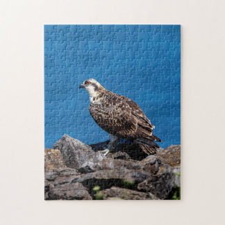Osprey on the rocks puzzle
