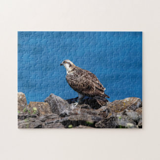 Osprey on the rocks puzzles