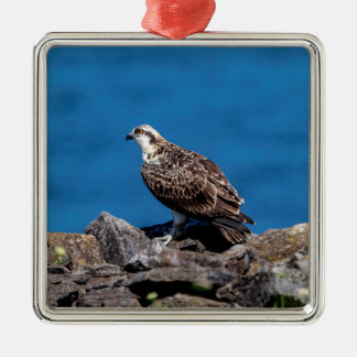Osprey on the rocks Silver-Colored square ornament