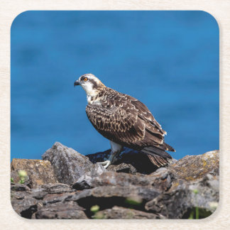 Osprey on the rocks square paper coaster