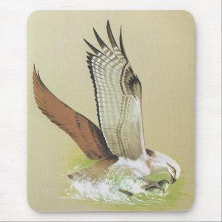 Osprey - Pandion haliaetus Mouse Pad