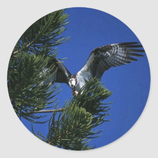 Osprey Round Sticker