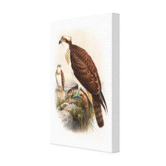 Osprey Sea Hawk John Gould Birds of Great Britain Canvas Print